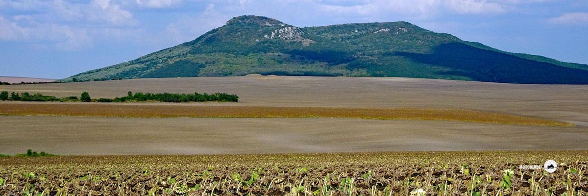 Riesige Sonnenblumenfelder in Bulgarien