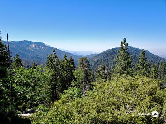 Riesige Waldgebiete