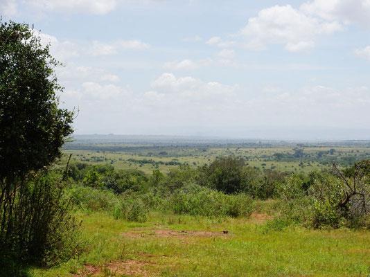 Blick gen Nairobi Nationalpark vom Sheldrick Elephant Orphanage.