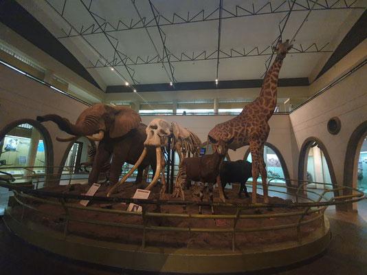 Die Big 5 und mehr im National Museum