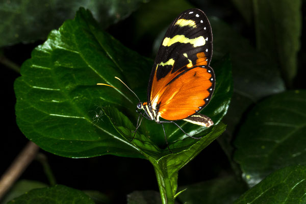 Le 06/09/2014 Papillons Hunawihr Alsace 68 Objectif Canon 100 macro f 2.8 L IS USM