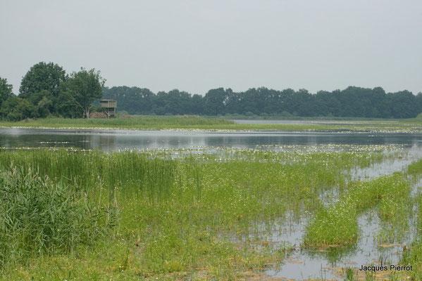 Etang à proximité du lac du Der.