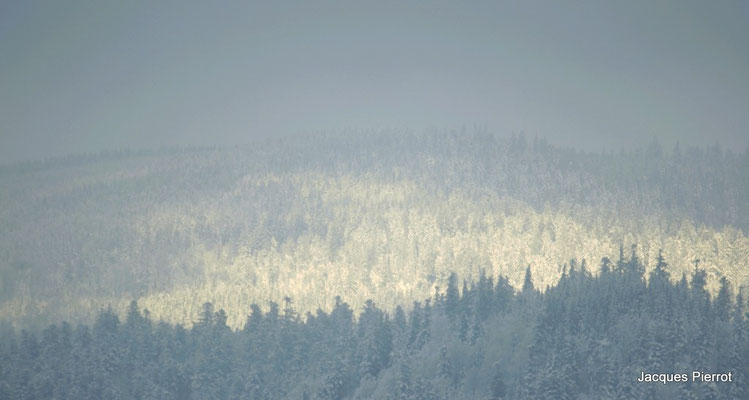 Forêts partiellement ensoleillées.(Hautes Vosges )