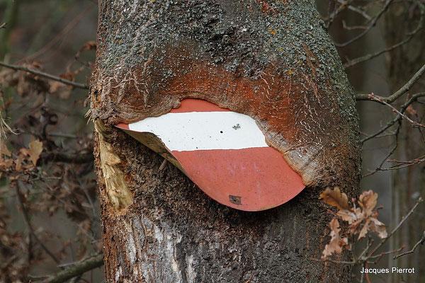 Samedi 03 décembre 2011 Quand la nature reprend ses droits. Illhaeusern (Alsace 68)