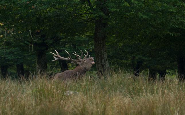 Le 27 / 09 / 2014  Cerf  (Parc de Saint Croix Moselle)