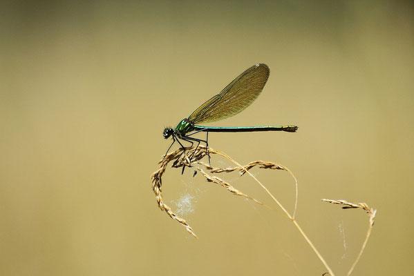 Le 11/08/2012  Agrillon photographier au 400 mm