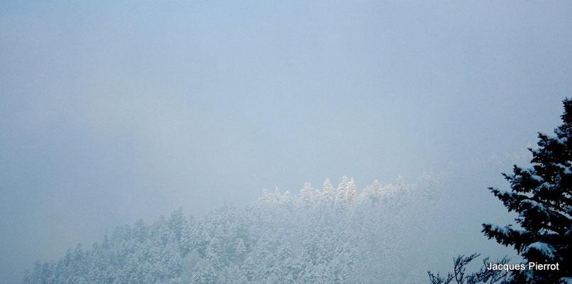 Les cimes ensoleillées. ( Hautes Vosges )