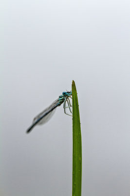 Le 02/07/2016  Agrillon Vosges 88 Objectif Canon 100 macro f 2.8 L IS USM