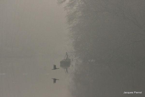 Vol d'un grand cormoran dans la brume.  ( Vosges )
