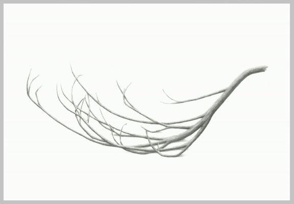 Phoenix, 2013. Bleistift auf Papier, 70 x 100 cm.