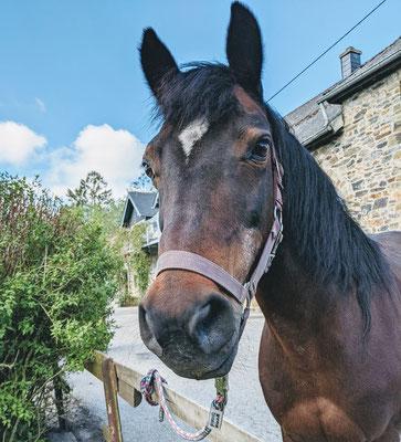 Pony Georgi auf dem Hof