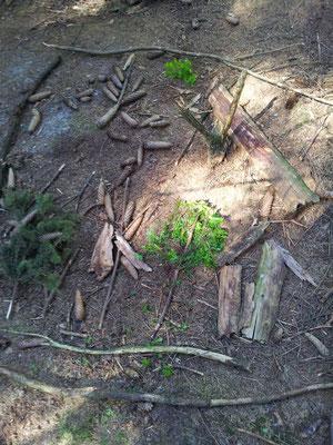 Was man so im Wald findet