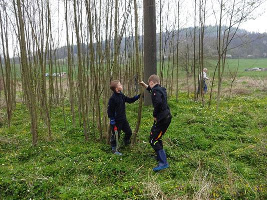 Hier wird gemeinsam abgewogen: Wie fällen wir den Baum am besten?