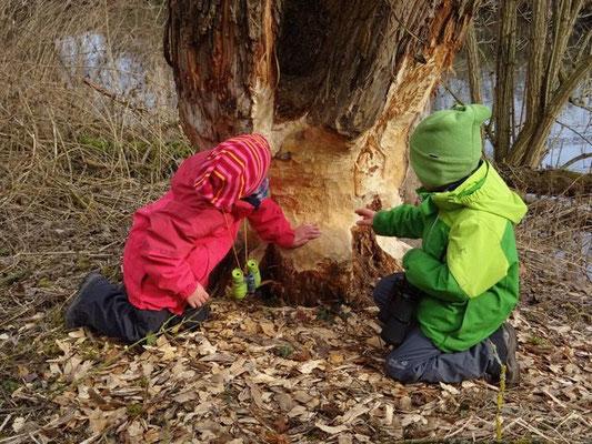 Die Kinder untersuchten fortschreitende Fällarbeiten