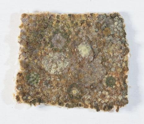 あめ,12x15 cm,oil on cotton