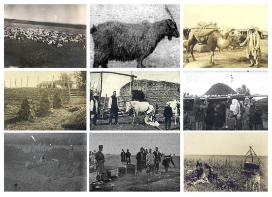 Activité pastorale chez les Bashkirs - Photographie 1908-1909