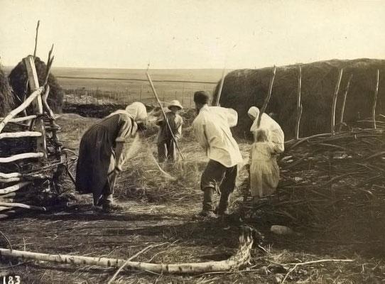 Battage des céréales (photo fin 19e)