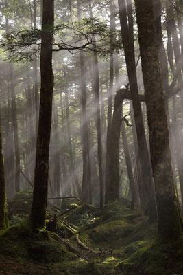森の目覚め  長野県白駒池