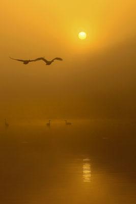 朝霧の中へ   2018年 埼玉の自然【奨励賞】   埼玉県川島町