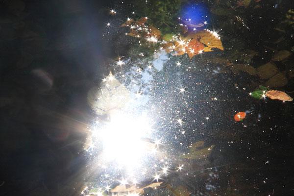 水中に輝く 2017年 第32回埼玉の自然【入選】    浦和市桜区
