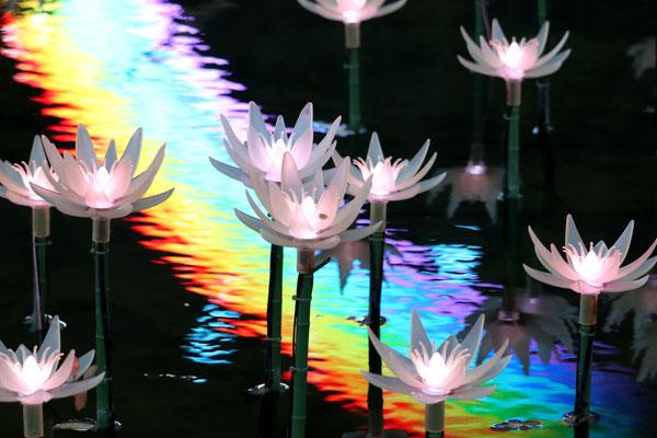 光の妖精たち     あしかがフラワーパーク