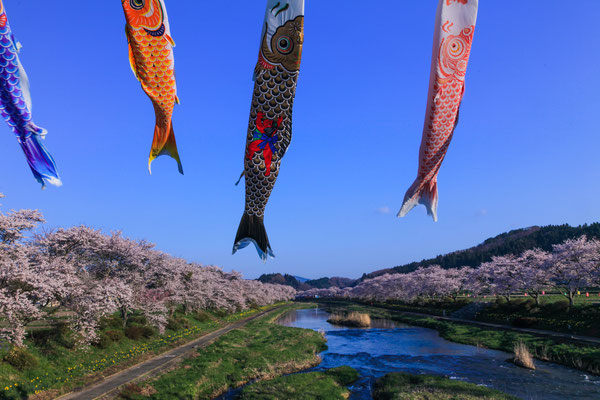 福島の元気はタンゴで♪ 第47回埼玉写壇展・テーマの部写団賞   福島県小野町