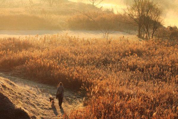 初冬の朝  第23回埼玉写真サロン展【準特選】    埼玉県志木市