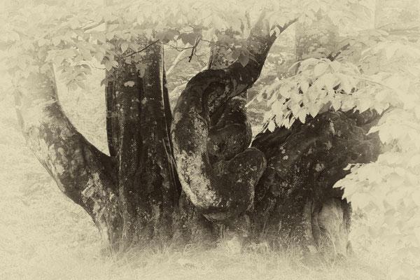 故郷の追憶  第67回川越市展【入選】        長野県木島平村