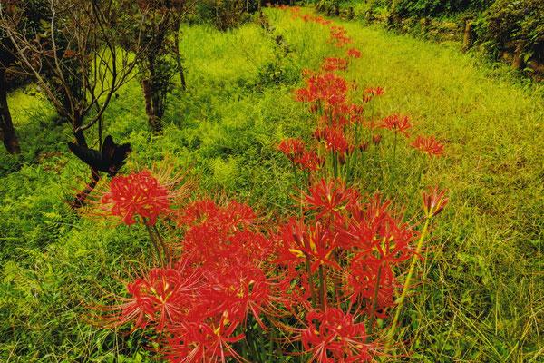 秋の小径 2019年 第34回埼玉の自然【入選】    埼玉県都幾川町