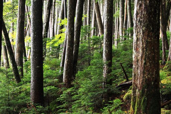 雨上がり   長野県・苔の森