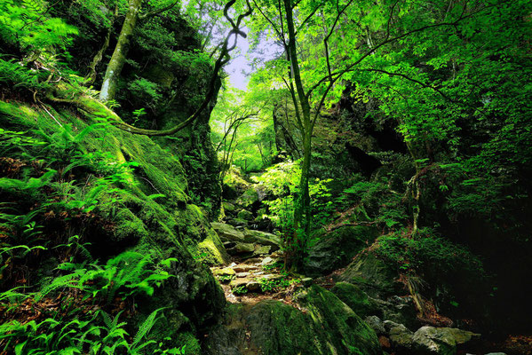 新緑に誘われて    第35回埼玉の自然【入選】