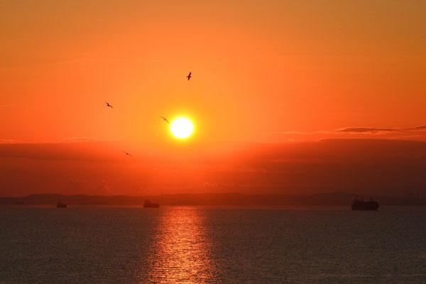 夕焼けとんび  千葉県・海ほたる
