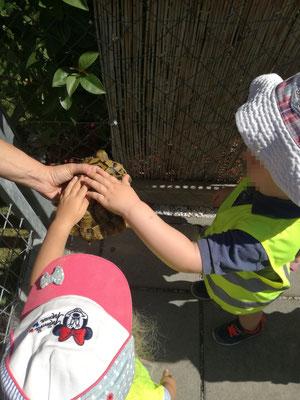 Wir durften Schildkröten streicheln und beobachten