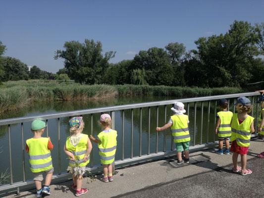 Donaupark 2019 Enten und Fische schauen