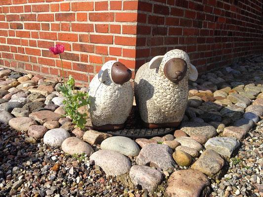 Unsere beiden steinernen Hausschafe an der Alten Deichkate