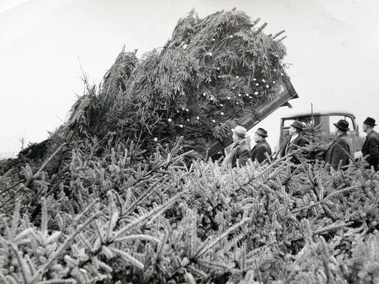 Mein Großvater und Vater belieferte den Hamburger Weihnachtsbaum Großmarkt mit Fichten.
