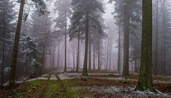 Photos de forêts des Vosges - Massif du Nideck, Alsace - Dominique MAYER - Photographie - www.dominique-mayer.com