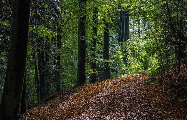 Photos de forêts des Vosges - Forêt de Haselbourg en Alsace - Dominique MAYER - Photographie - www.dominique-mayer.com