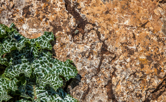 Parc naturel d'Antequera en Espagne - Photos de nature - Photos de paysage en Espagne - Vacances en Espagne - Dominique MAYER - www.dominique-mayer.com