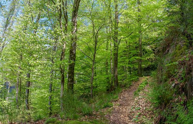 Photos de forêts des Vosges - Forêt du Nonnenberg Walscheid en Moselle - Dominique MAYER - Photographie - www.dominique-mayer.com
