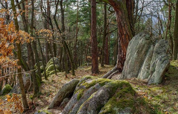 Photos de forêts des Vosges - Forêt du Ramstein et de l'Ochtenbourg, Alsace - Dominique MAYER - Photographie - www.dominique-mayer.com