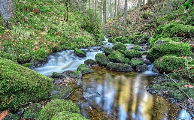 Paysage forestier - Breitnau, Schwartzwald (Forêt Noire), Allemagne - Photographie HDR - Dominique MAYER - www.dominique-mayer.com
