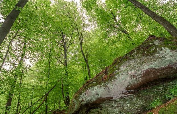 Photos de forêts des Vosges - Schlosserhöhe Forêt de Saverne - Dominique MAYER - Photographie - www.dominique-mayer.com