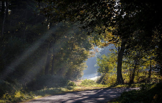 Photos de forêts des Vosges - Forêt de Provenchères sur Fave, Vosges - Dominique MAYER - Photographie - www.dominique-mayer.com