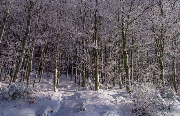 Photos de forêts des Vosges - Grendelbruche, Alsace - Dominique MAYER - Photographie - www.dominique-mayer.com