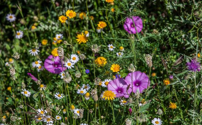 Fleurs - Sierra de Grazalena en Espagne - Photos de nature - Photos de paysage en Espagne - Vacances en Espagne - Dominique MAYER - www.dominique-mayer.com