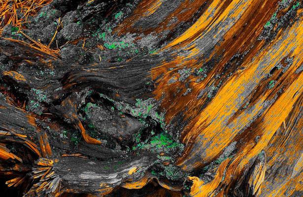Ecorces d'arbres - Photographies de nature - Dominique MAYER - www.dominique-mayer.com