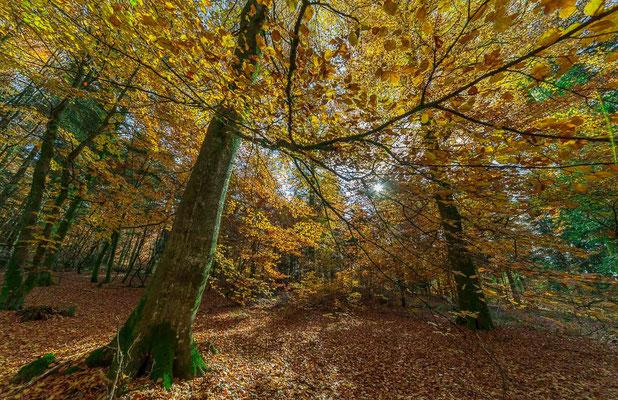 Photos de forêts des Vosges -  Alsace - Dominique MAYER - Photographie - www.dominique-mayer.com