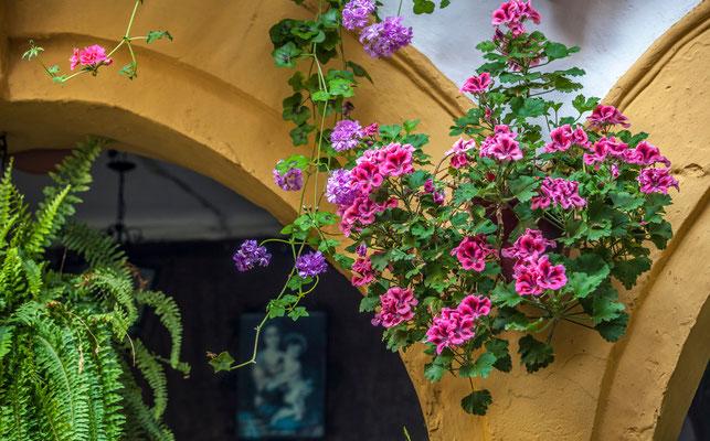 Patios de San Basilio de Cordoue - Les rues de Cordoue - Cordoba - Badauds - Flâner à Cordoue - Cordoba en Espagne - Photos de Cordoue - Architecture de Cordoue - Vacances en Espagne - Dominique MAYER - www.dominique-mayer.com