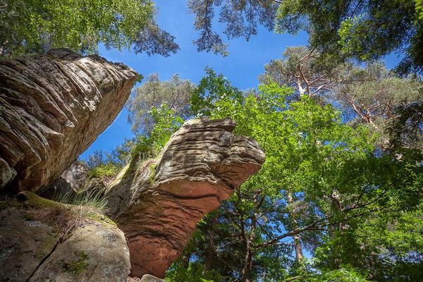 Photos de forêts des Vosges - Forêt du Kemberg, roches de Saint-Martin, Saint-Dié des Vosges - Dominique MAYER - Photographie - www.dominique-mayer.com